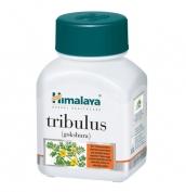 Tribulus Terrestris (GOKSHURA ) 60 caps